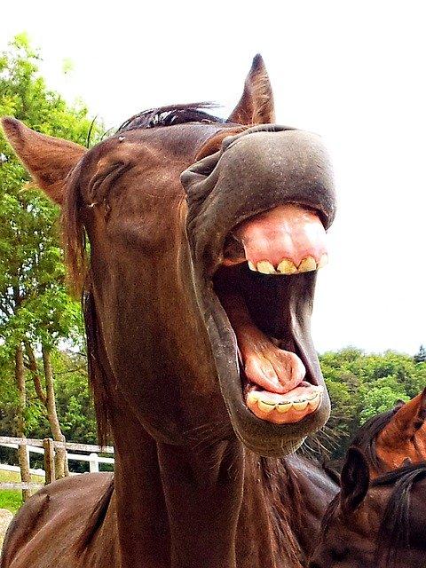 saltmangel hos hest